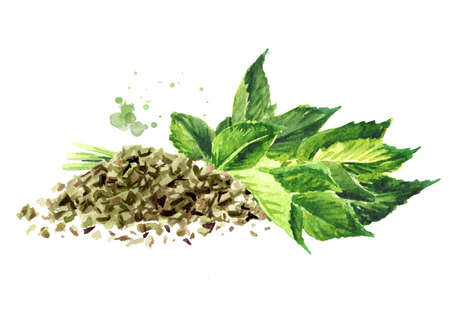 Medicinal plant Aegopodium podagraria or ground elder, bunch of fresh and chopped dried leaves. Watercolor hand drawn illustration, isolated on white background
