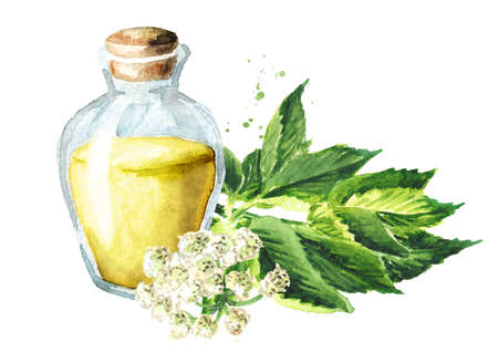 Tincture from Medicinal plant Aegopodium podagraria or ground elder. Watercolor hand drawn illustration, isolated on white background Banque d'images