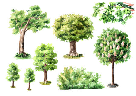 Urban trees set, Watercolor hand drawn illustration isolated on white background