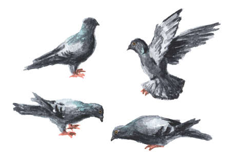 Urban birds pigeons set, Watercolor hand drawn illustration isolated on white background Banque d'images