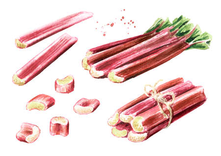 Fresh cutted Rhubarb stalks set. Watercolor hand drawn illustration isolated on white background Banque d'images