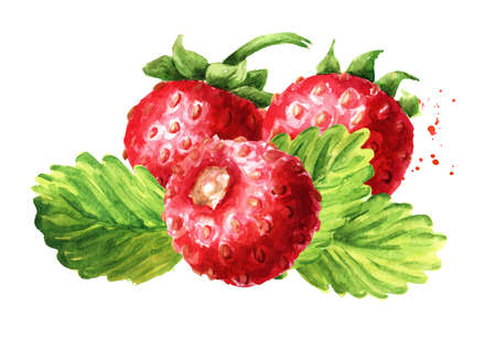 Wild forest strawberries composition. Fresh berries with leaves. Hand drawn watercolor illustration isolated on white background
