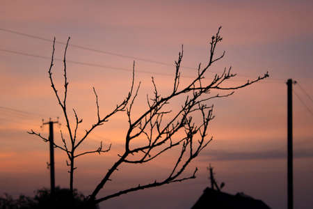 Silhouette of a tree branch against a background of a pink sky