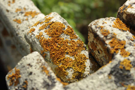 Yellow mildew on a cement fence against a grass background