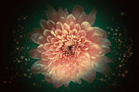 Abstract flower background, over beautiful dark gradient photo
