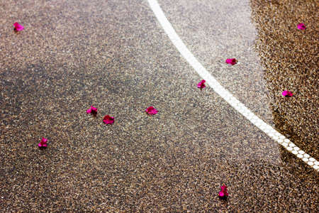 Wet road outdoors with pink petals and white line. Textured background. photo