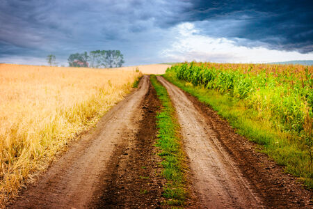depth of field: Rural landscape with road between two fields: corn and oat. Stormy sky. Shallow depth of field.