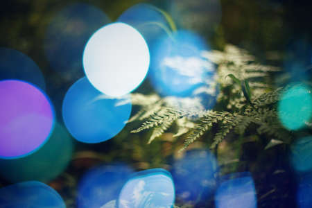 bokeh lights: Nature Abstract Background. Close Up Leaf of Plant with Bokeh Lights. Selective Focus. Space for Text. Stock Photo