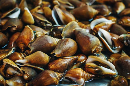 mollusc: Food Background with Mollusc at a Fresh Market in Thailand. Sea Food. Selective Focus.