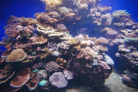 aquarium hobby: Underwater Background. Tropical Aquarium with Small Fishes and Corals.