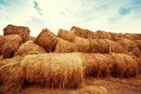 hay bales: Golden hay bales on the field at sunset. Agriculture background and concept. Nature scenics. Stock Photo