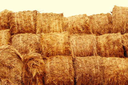 hay bales: Hay bales on the field at summer time. Agriculture background and concept. Space for text. Stock Photo