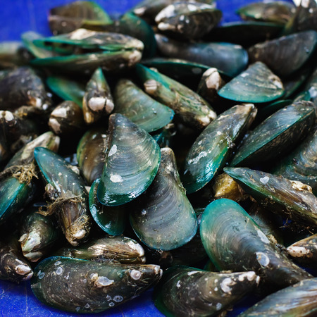 edible fish: Green mussels on a fish market, seafood Stock Photo
