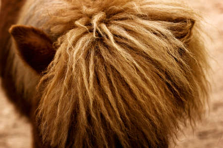 Close-up of horse mane, rural concept Standard-Bild
