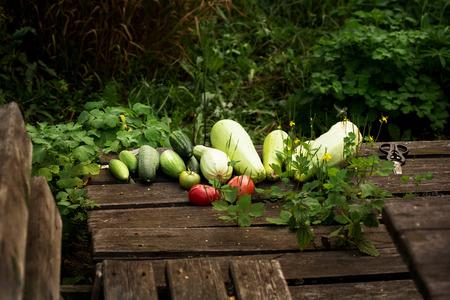 Fresh summer vegetable crop on wooden background outdoors,s, selective focus Standard-Bild