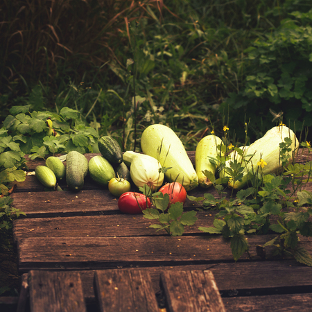 Fresh summer vegetable crop on wooden background outdoors, selective focus, image toned Zdjęcie Seryjne