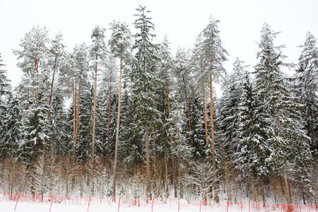 Fenced ski slope in winter forest, active winter sport