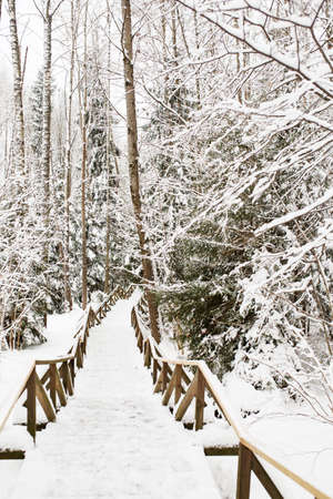 Way of health, boardwalk for pedestrians in winter forest, snowy weather outdoors