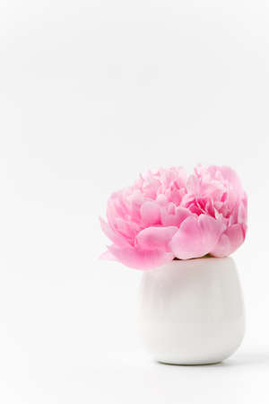 Innocence and delicacy minimalistic valentine day concept, one single flower of pink peony in small vase on white background, concept of sensuality and femininity Stock Photo