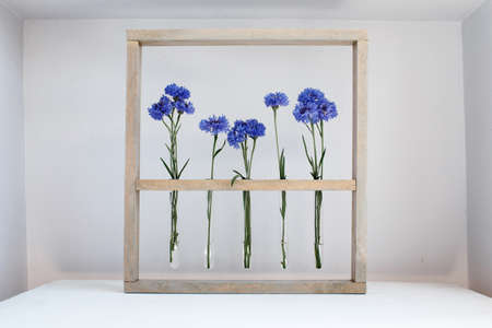 Five blue nice cornflowers in little vases in a wooden frame over gray, simple flower gift and decoration
