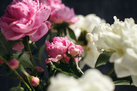 Dreamy flower bouquet of pink natural peonies flowers, spring and summer season bouquet, selective focus