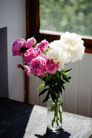 Flower bouquet of pink and white fresh peony flowers in a vase in sunshine under the window