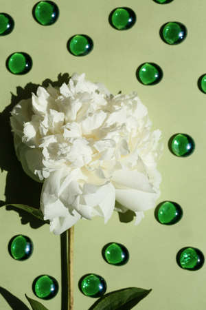 Flat lay with white peony flower close-up on pastel olive color with green marbles