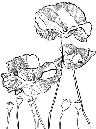 Handmade botanical vector illustration of poppy flowers and burgeons in graphic style. Black and white with line art on white backgrounds. Vectores