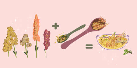 Quinoa cereal grain and products,vegan organic food. The flowering panicles. Gluten-free.Steamed balls of crushed durum.Spoon with seeds. Glass bowl with porridge. Doodle vector poster for cafe menu. 矢量图像