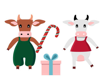 Cute cartoon Ox presenting gift for cow in dress and holding candy cane.Happy Chinese New Year 2021,Merry Christmas card.Seasonal sale,gift card or promo flyer template.Bull family celebrating.Vector