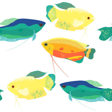 Honey, spotted and moon gourami seamless pattern.Trichogaster labyrinth fish from South Asia. Aquarium inhabitant, underwater world.Vector illustration trendy print for fabric, notebook,pet shop flyer 矢量图像