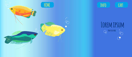 Honey, spotted and moon gourami horizontal banner.Trichogaster labyrinth fish from South Asia.Website template for aquarium store, pet shop. Underwater world.Vector trendy illustration. 矢量图像