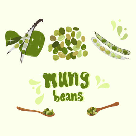 Illustration with fresh Mung Beans and sprouts with leaves. Spoon with green gram. Pods with seeds. Organic legumes products.