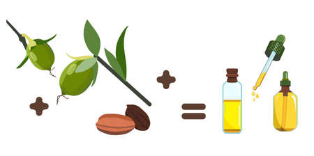 Jojoba oil,seeds and leaves.Plant extract for cosmetology.Elixir or serum,lotion for hair and nails.Powerful antioxidant.Vector illustration for traditional herbal medicine.Spa products