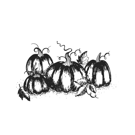 Hand drawn black and white pumpkin patch. Perfect for Thanksgiving day greeting card, banner or template. Illustration