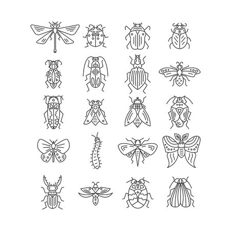 Bugs and insects isolated on white background Stock Vector - 127108566