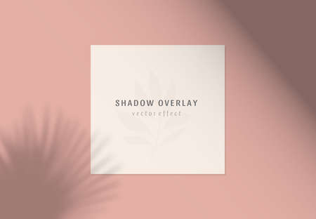 Vector shadow overlay effects on white papers. Branding and mockup presentations. Natural sun lighting and shadow. The palm leaves overlays shadows