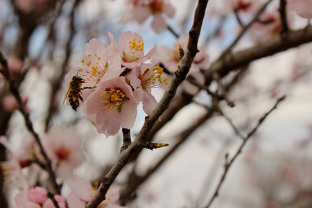 tenderness: First flowers of spring. Beautiful and tenderness