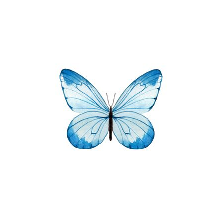 Watercolor blue butterfly. Single insect isolated on white. Hand painted illustration for summer design. Stockfoto