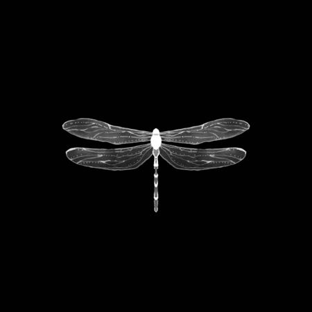 Black and white illustration of dragonfly. Single insect isolated on black. Stockfoto