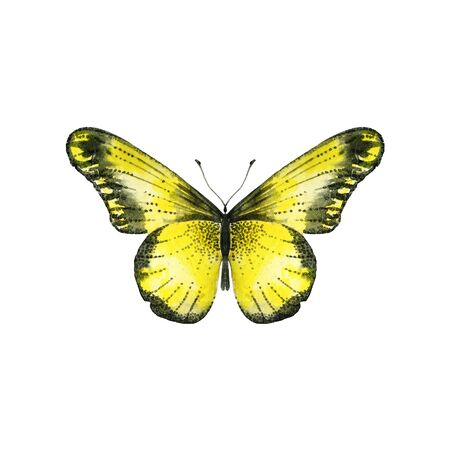 Watercolor yellow butterfly. Single insect isolated on white. Hand painted illustration for summer design.