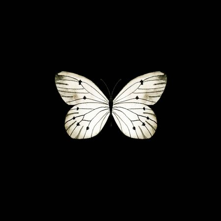 Illustration of white butterfly. Single insect isolated on black.