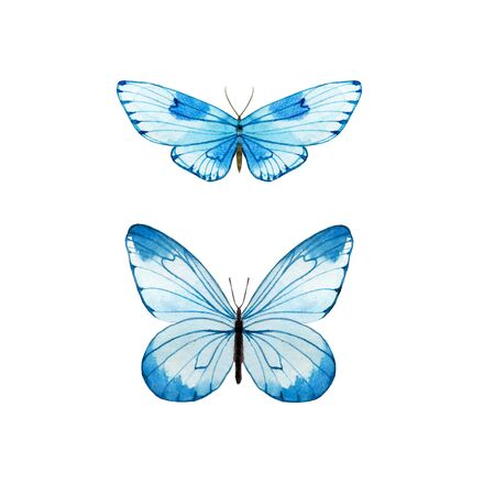 Watercolor blue butterflies. Two insects isolated on white. Hand painted illustration for summer design.