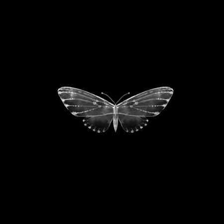 Black and white illustration of butterfly. Single insect isolated on black. Stockfoto