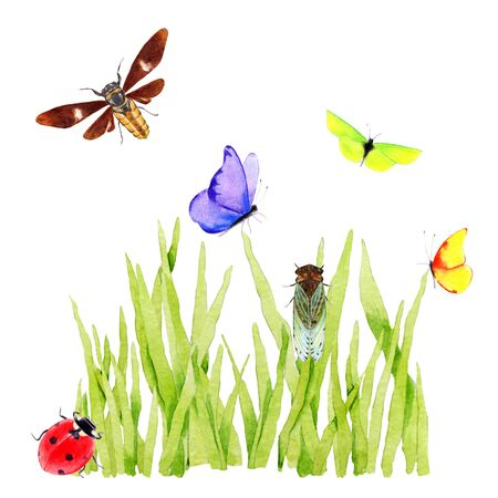 Watercolor green grass with insects. Hand painted illustration on white background. Stockfoto