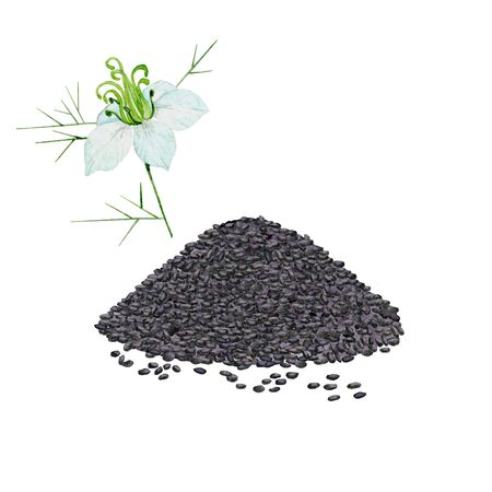 Pile of black seeds and cumin flower. Hand painted watercolor illustration on white background.