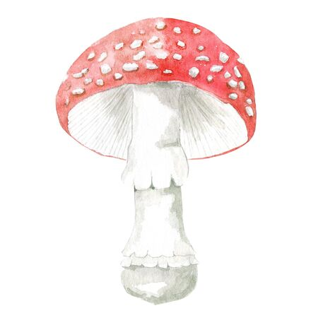Fly agaric mushroom isolated on white. Hand drawn watercolor element. Forest amanita for logo, recipe, menu, label, icon, packaging. Botanical illustration of toxic mushroom. Stock Photo