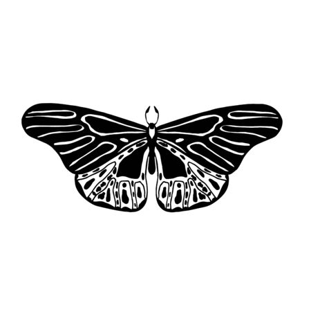 Vintage detailed sketch. Exotic moth for packaging, label, icon design. Tropical butterfly isolated on white. Vector hand drawn illustration of insect with wings.
