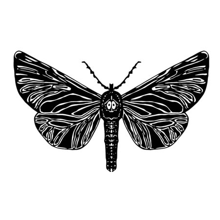 Tropical flying insect isolated on white.  Vector hand drawn illustration of butterfly. Exotic moth for packaging, label,  icon design. Vintage detailed sketch.
