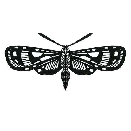 Vector hand drawn illustration of insect with wings. Exotic moth for packaging, label, icon design. Vintage detailed sketch. Tropical butterfly isolated on white.